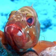 glowa rybki