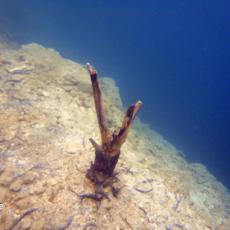 zakrzówek nurkowanie